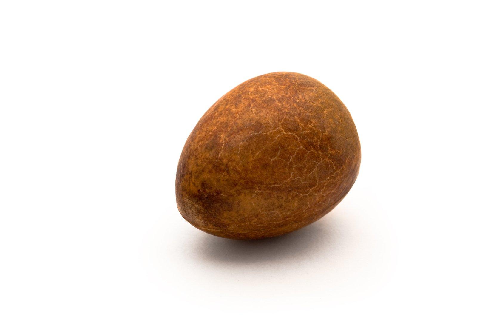 free avocado seed 2 stock photo