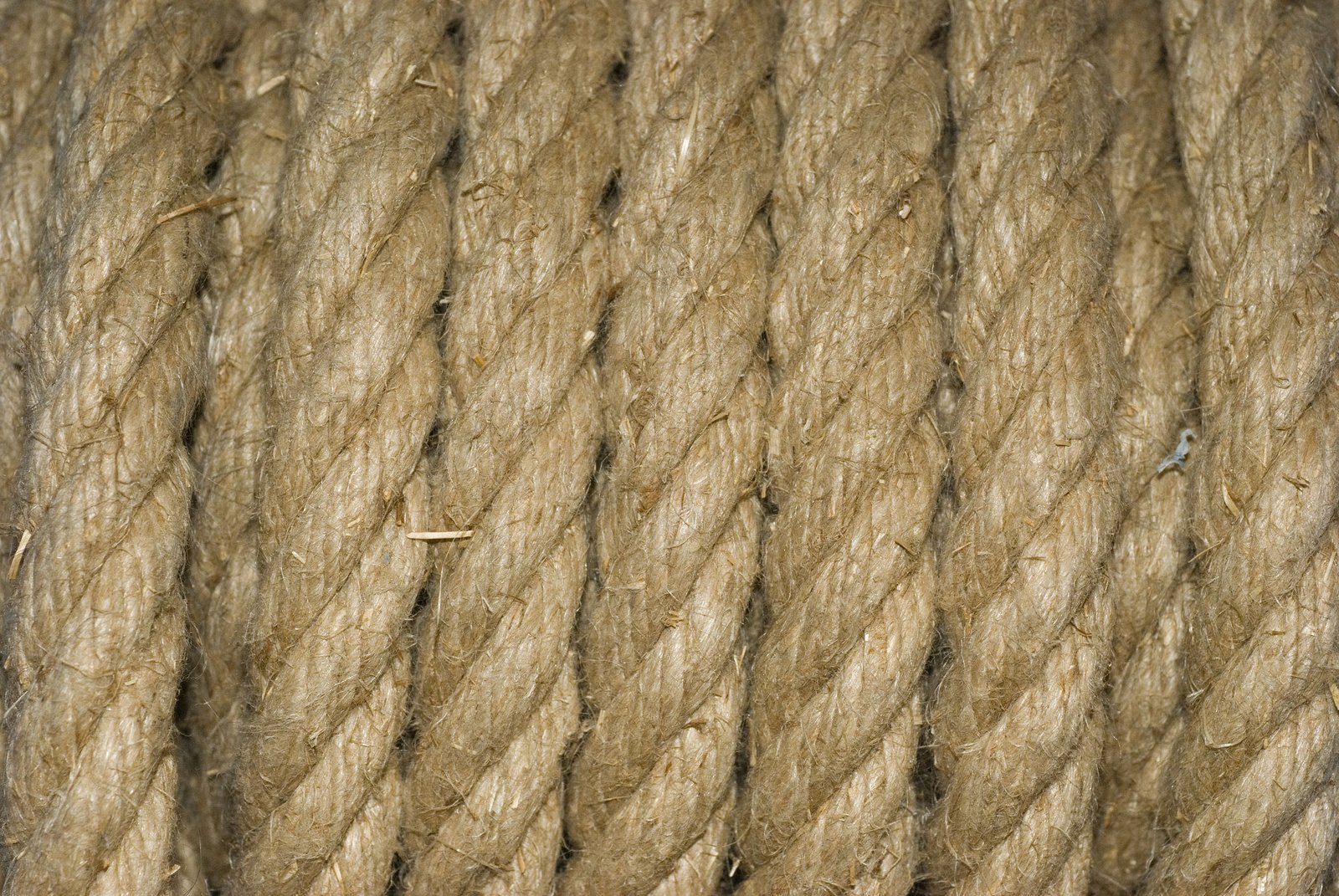 Line Texture Images : Free lines texture stock photo freeimages