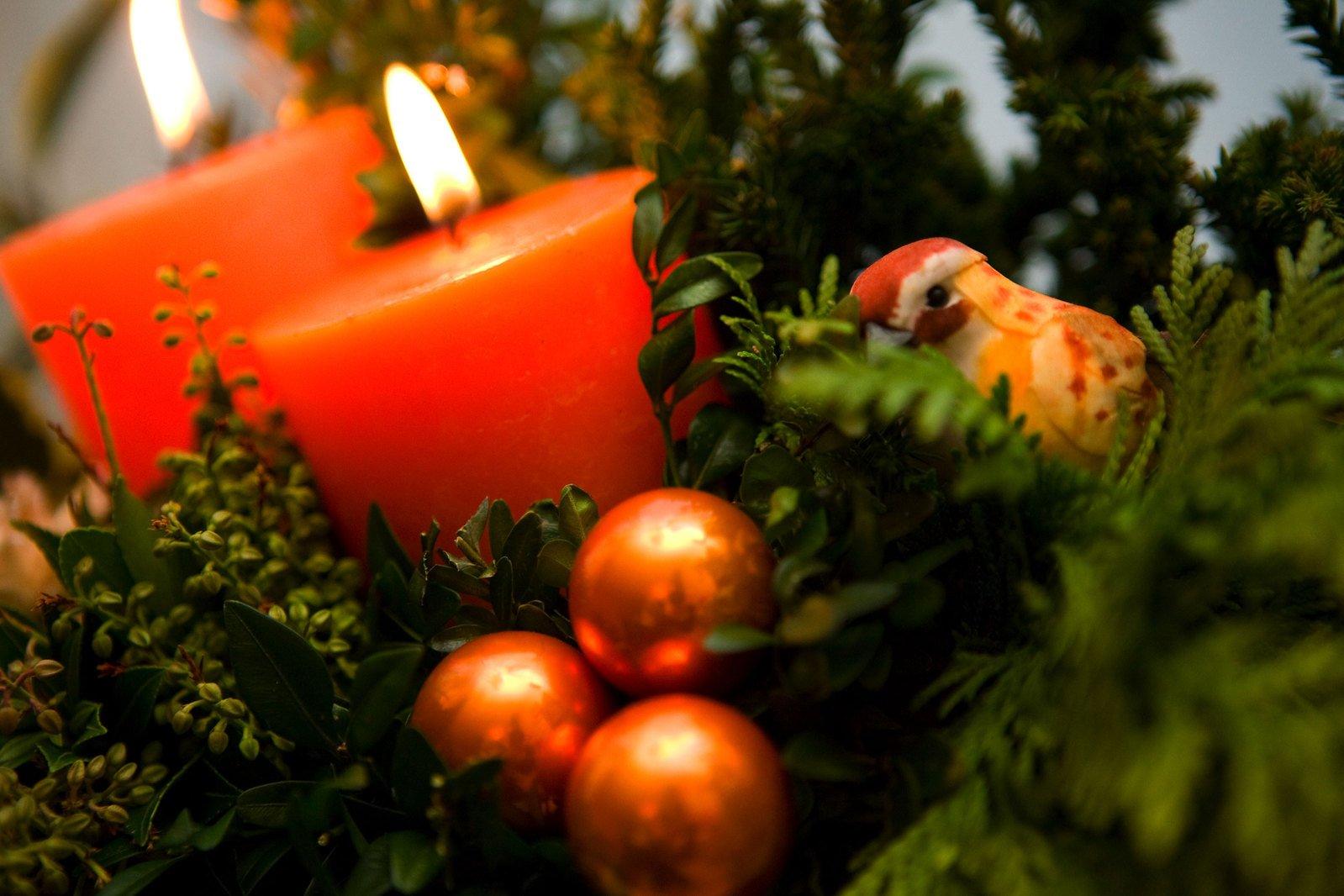 Free Weihnachten-Pflanze Stock Photo - FreeImages.com