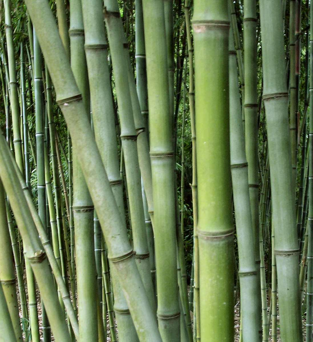 Bamboo Stcik People ~ Bamboo photos freeimages