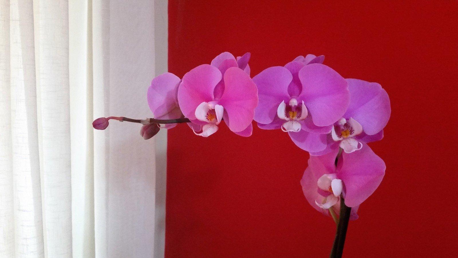 orchid,flower,inddor,violet