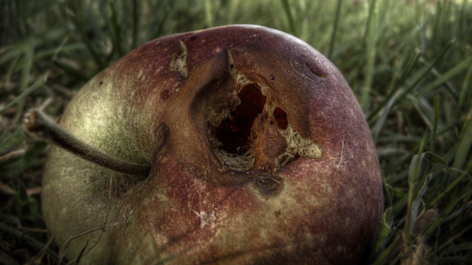 картинка гнилое яблоко внутри статье, расскажем, как