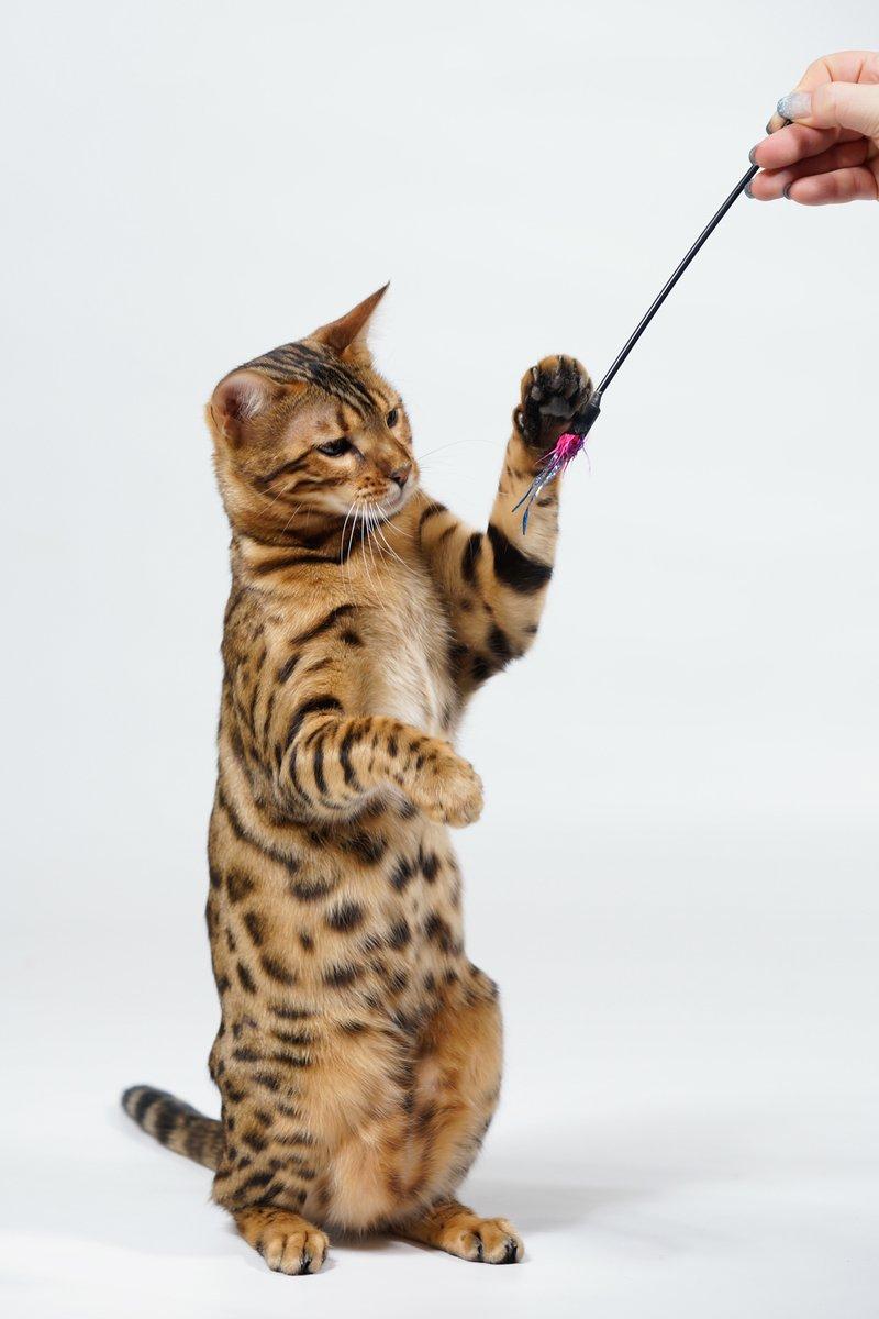 Cat Spiele