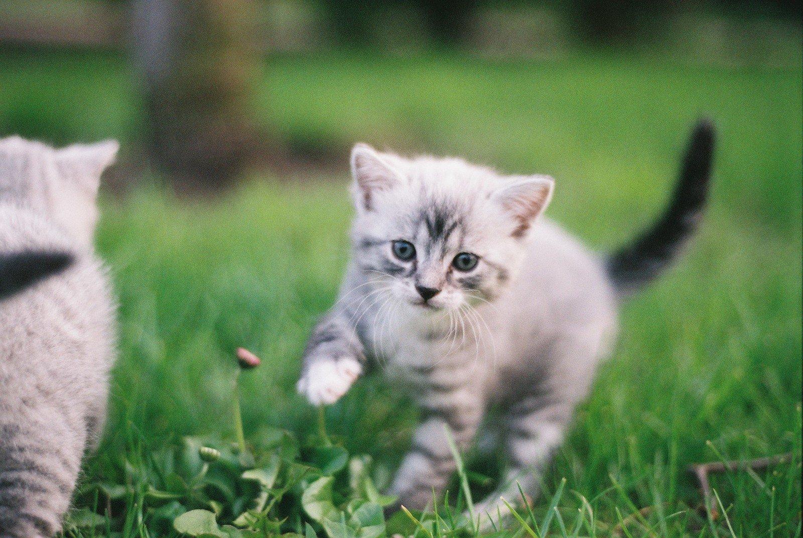 壁纸 动物 猫 猫咪 小猫 桌面 1600_1071