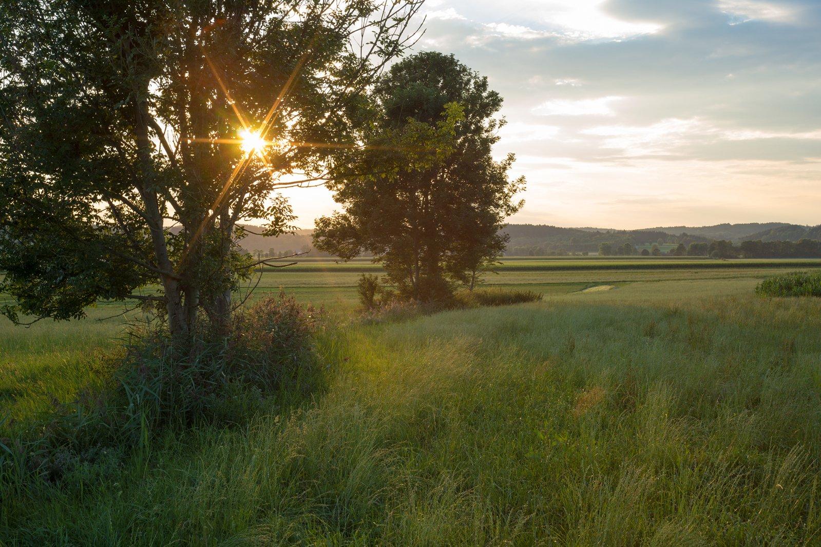 Free Sunset In Green Field Landscape Stock Photo