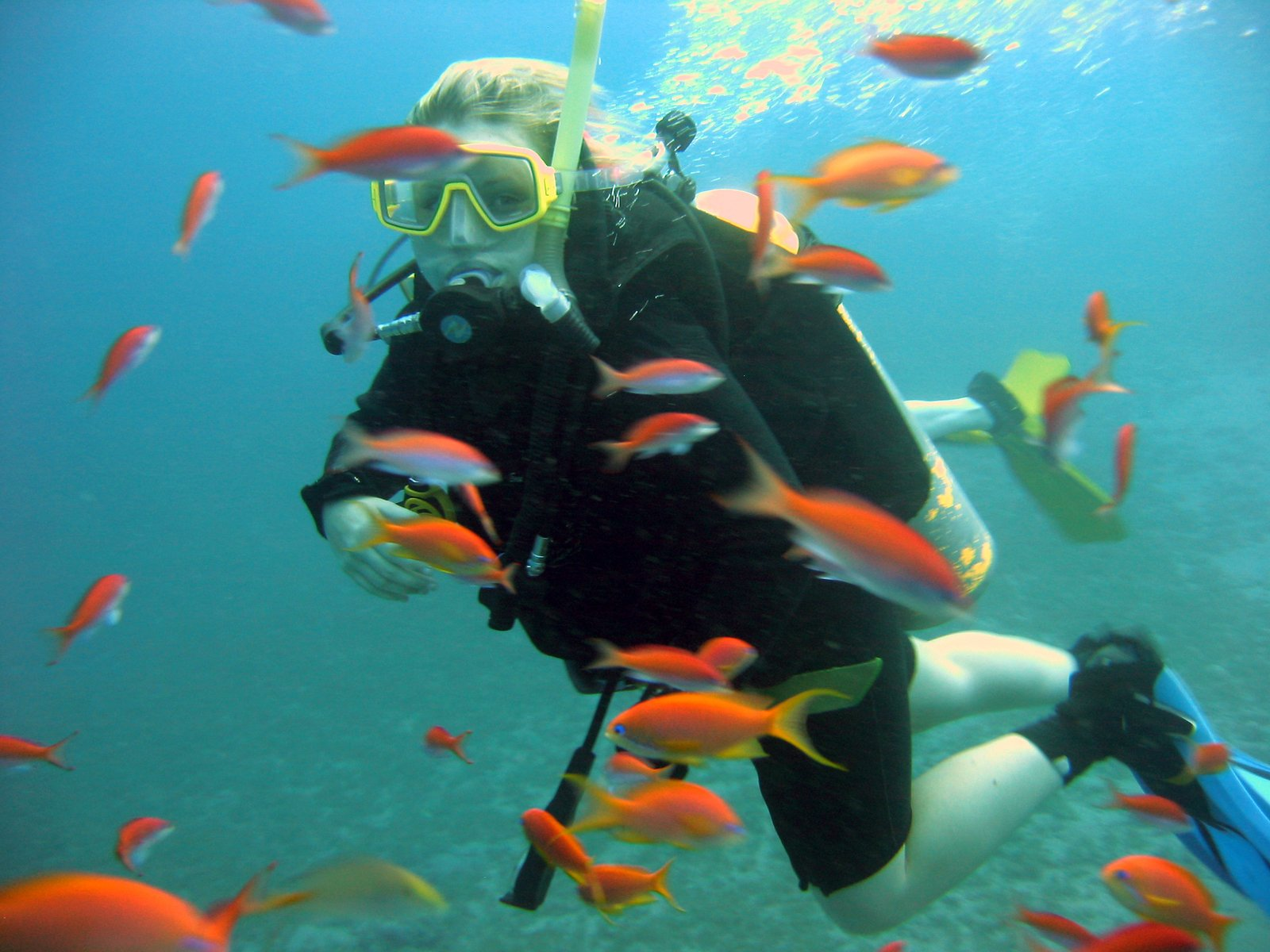Diving in Egypt near Dahab in the red sea