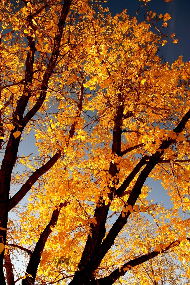 Fall leaves 01