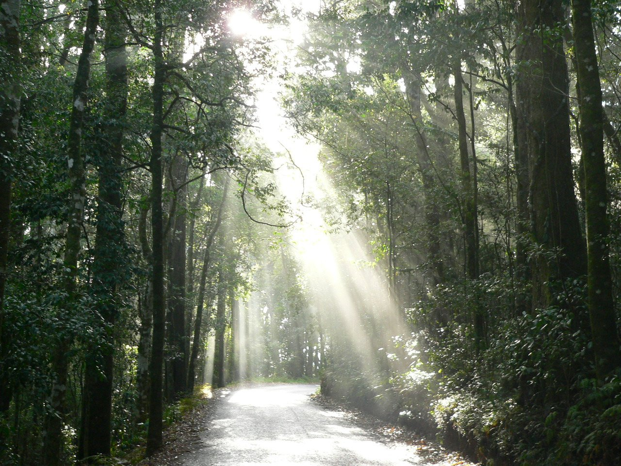 Free Light Through The Forest Stock Photo Freeimages Com