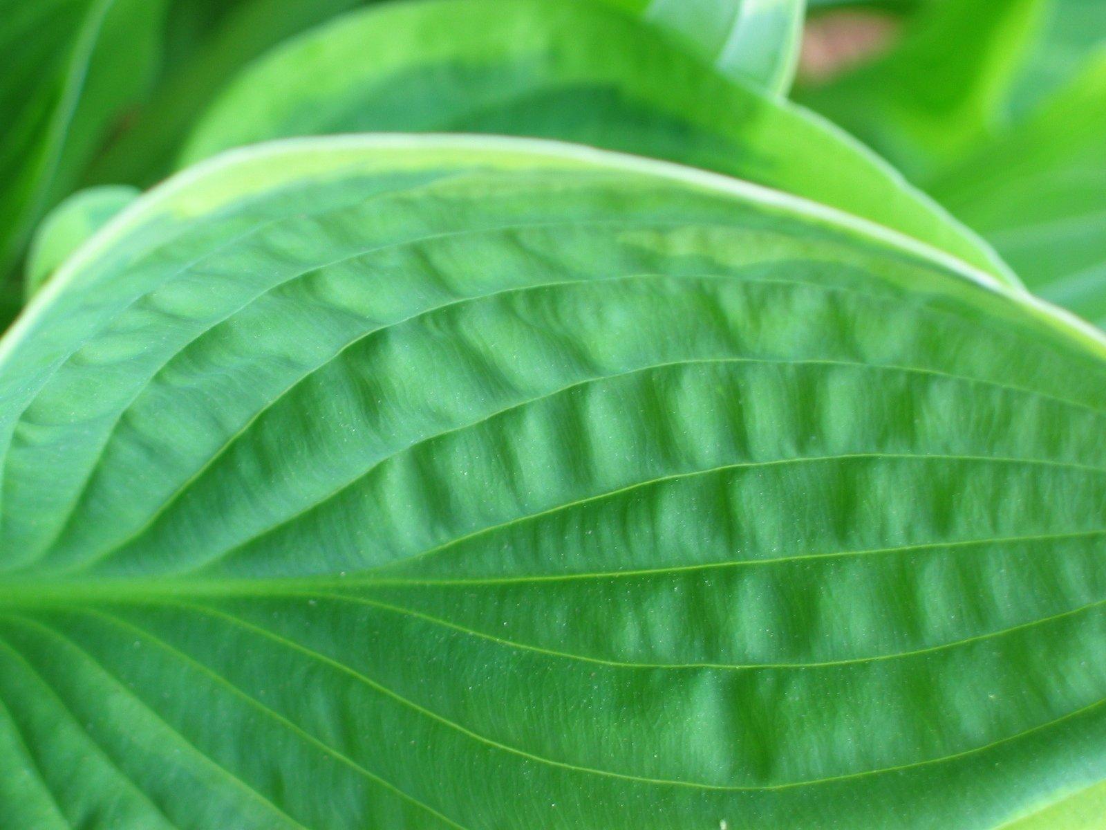 Free lush jungle foliage Stock Photo - FreeImages com