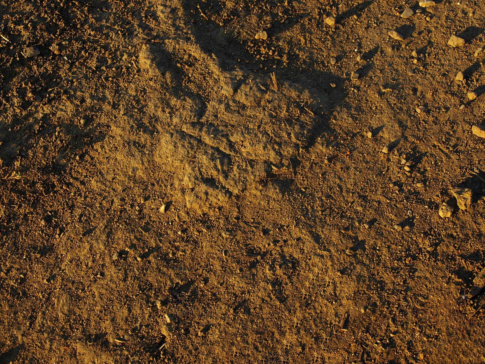 Free Dirt Texture Stock Photo - FreeImages.com