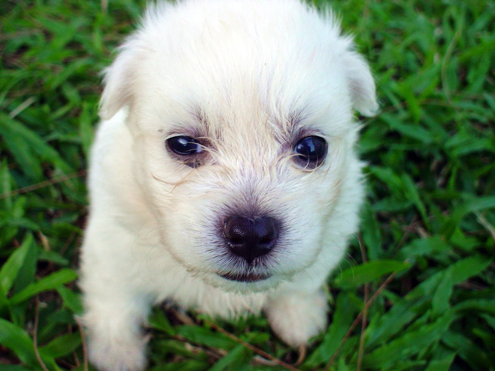 Free Sad Puppy Stock Photo - FreeImages.com