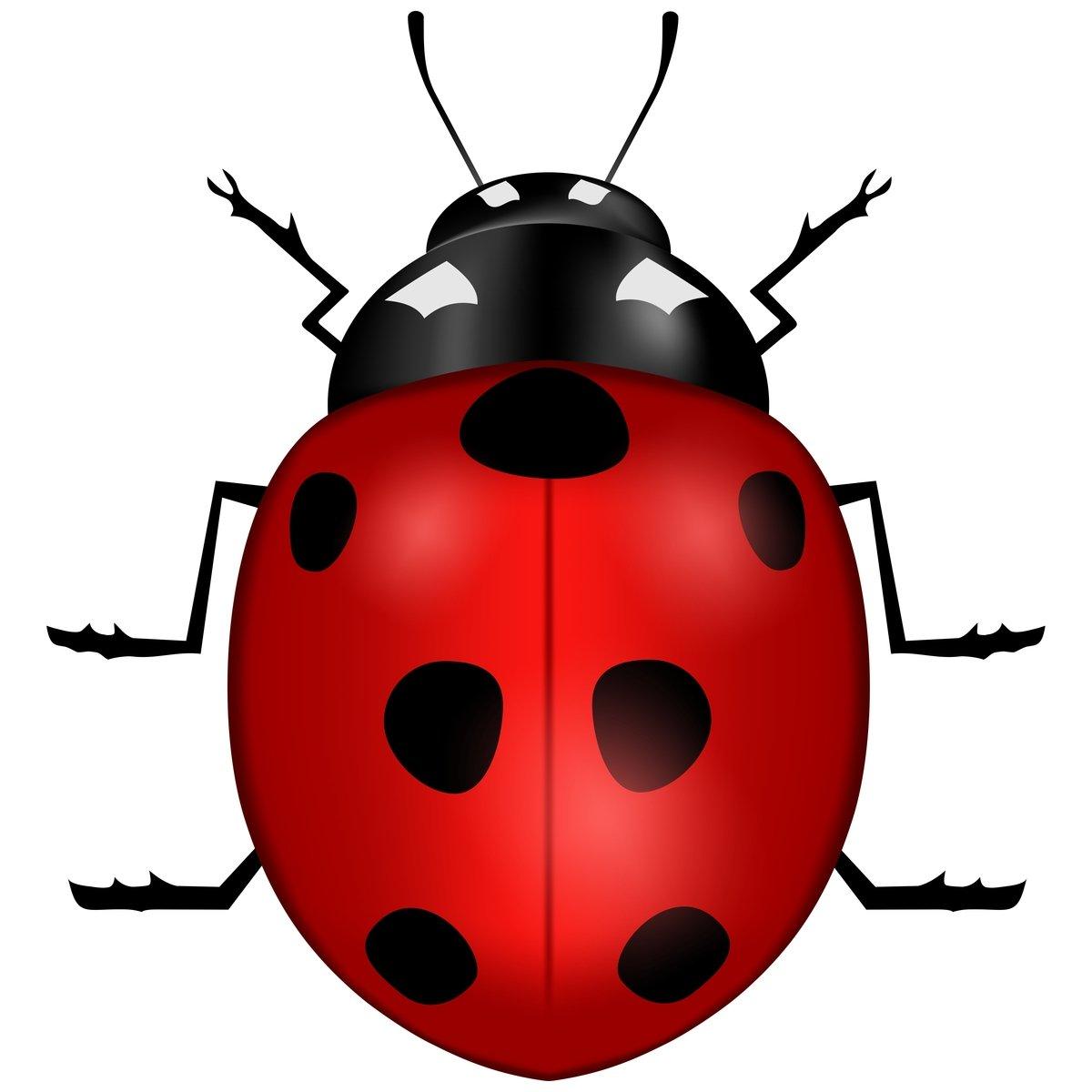 Free vector ladybug stock photo freeimages free vector ladybug stock photo stopboris Image collections