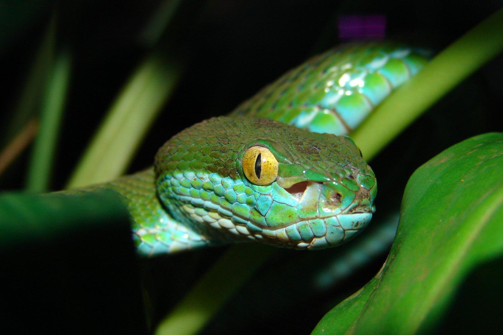 Free Green Snake Stock Photo - Freeimagescom-1955