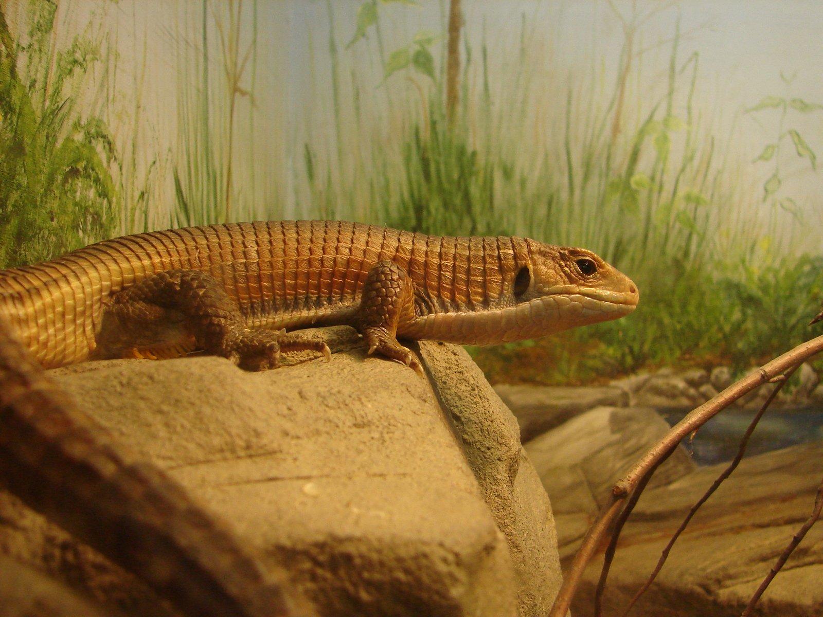the lizard king