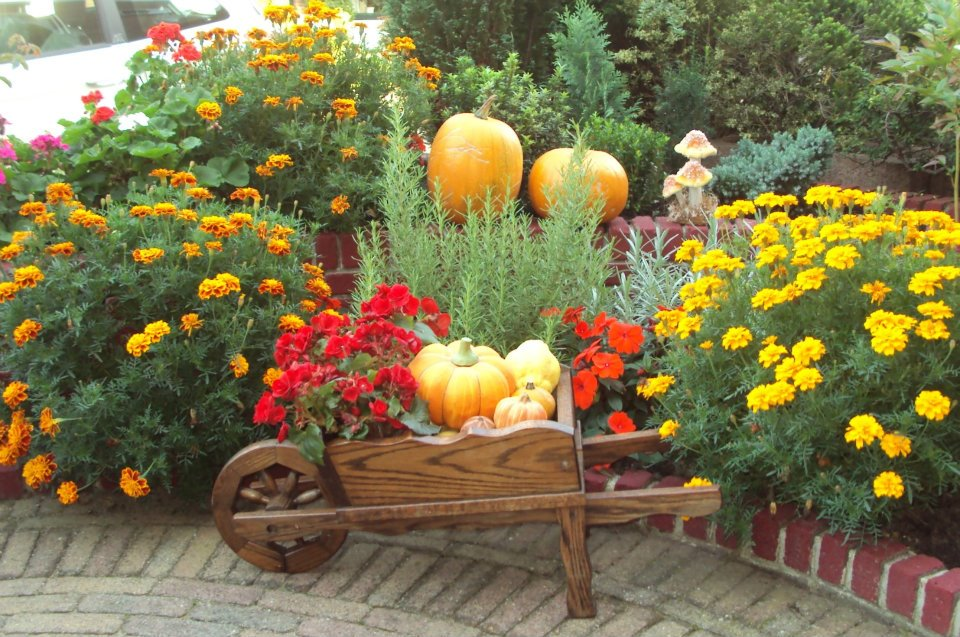 Free garden in autumn stock photo for Avoir un beau jardin