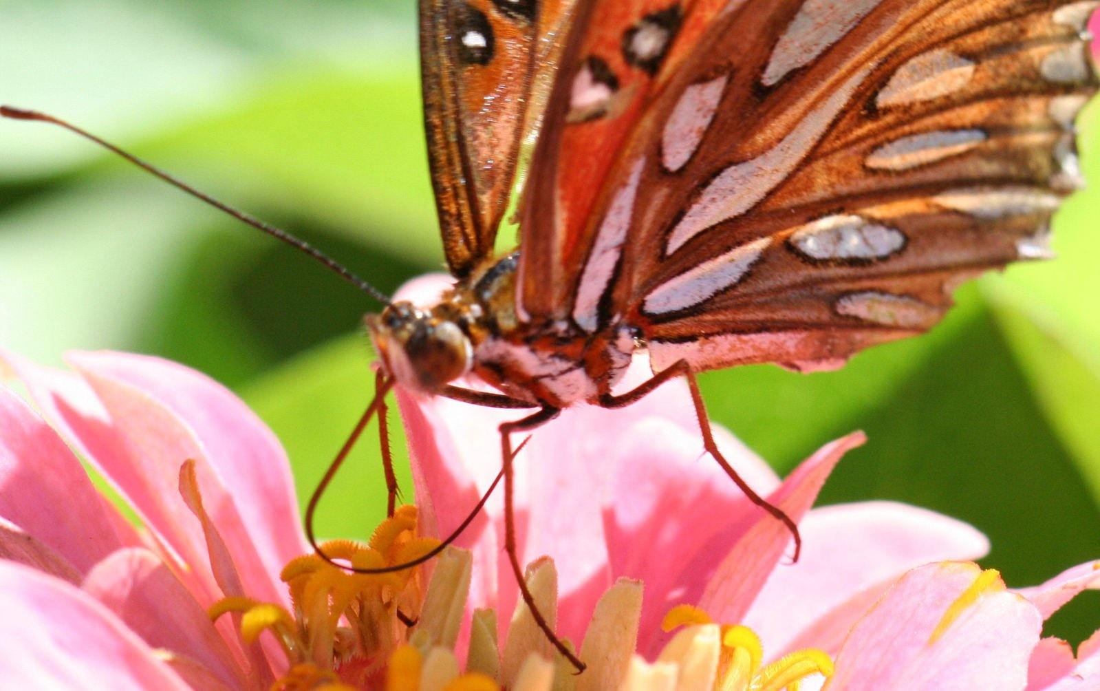 Free Butterfly Closeup Stock Photo - FreeImages.com