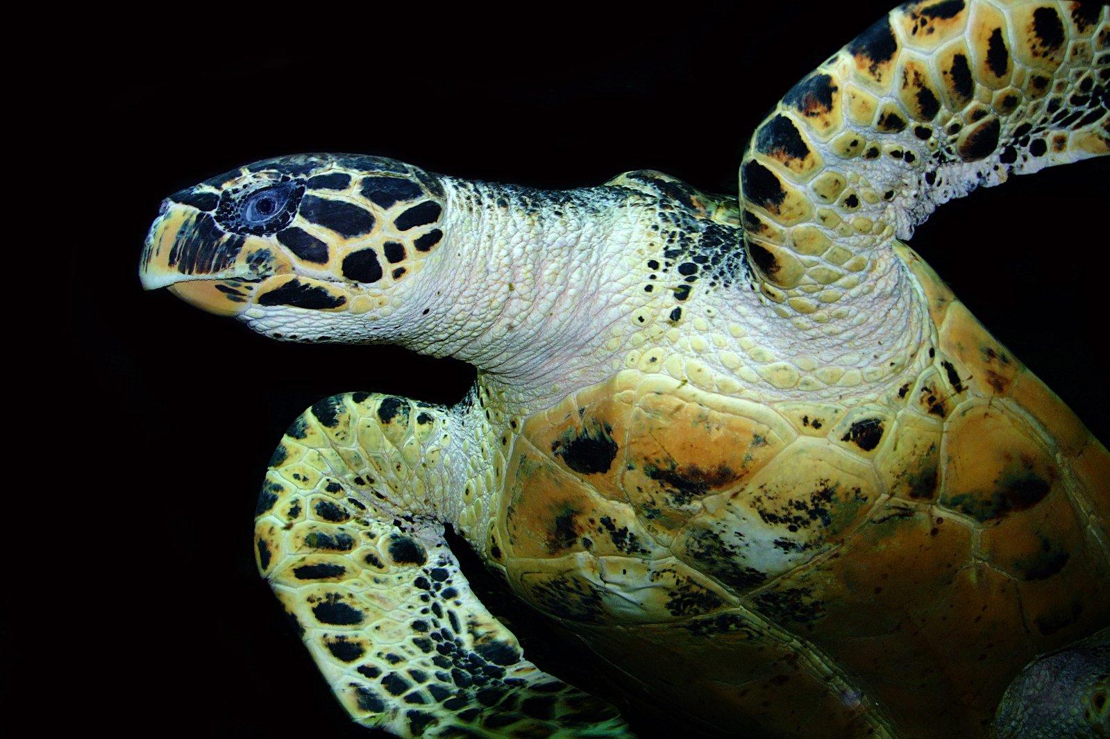 free 海龟 stock photo