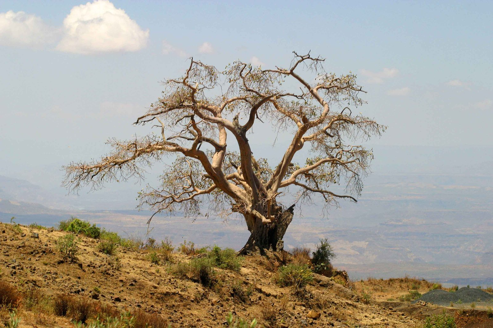 Dead Tree, Namibia, Africa Photograph by Keith Levit