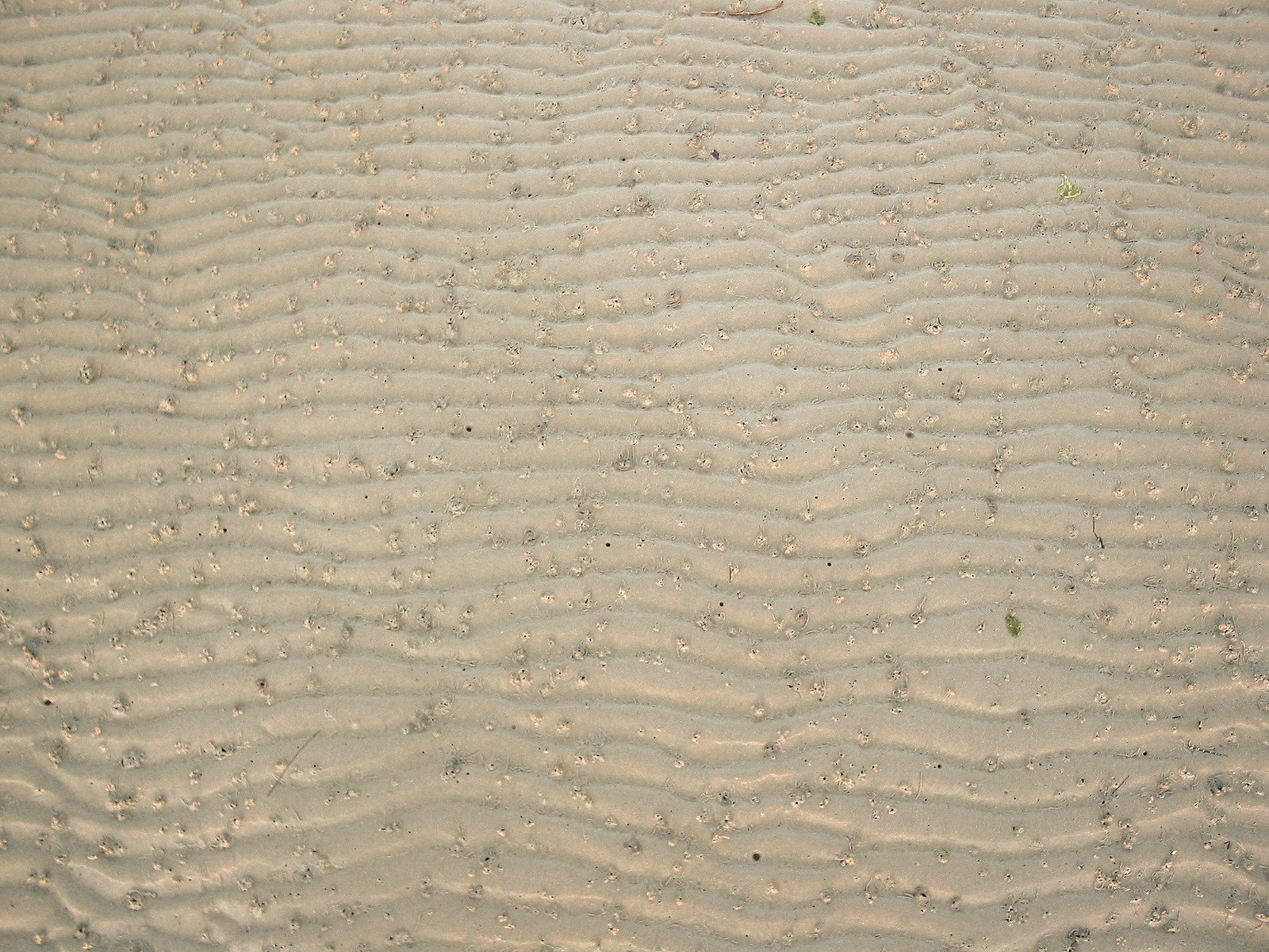 Free Texture Sable Stock Photo Freeimagescom