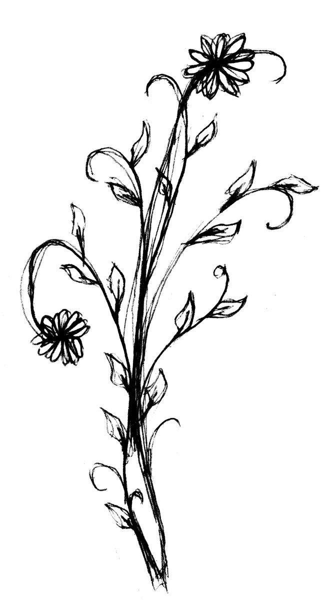 Free Bleistift Blumen Stock Photo Freeimages Com