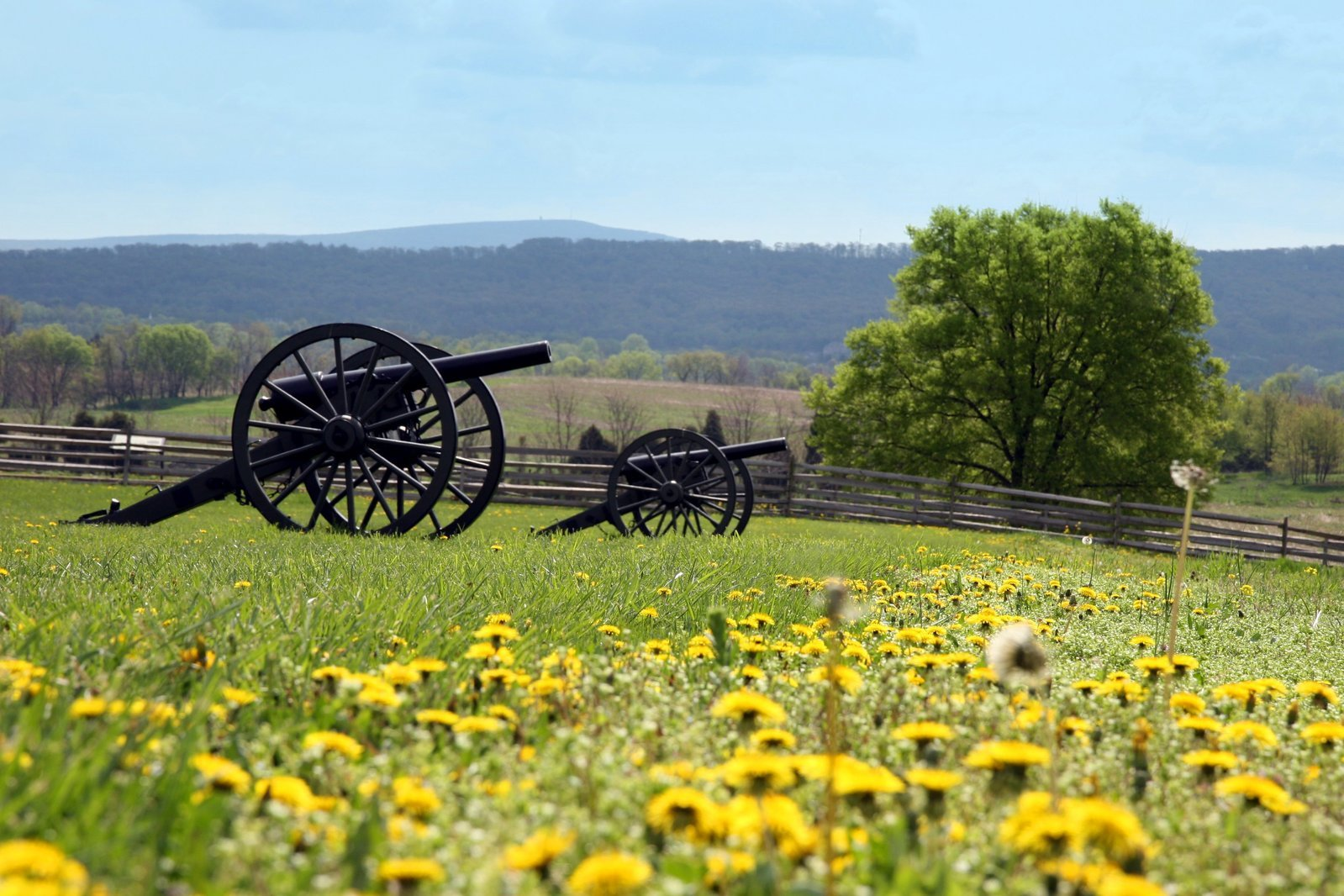 Cannon at Antietam 1