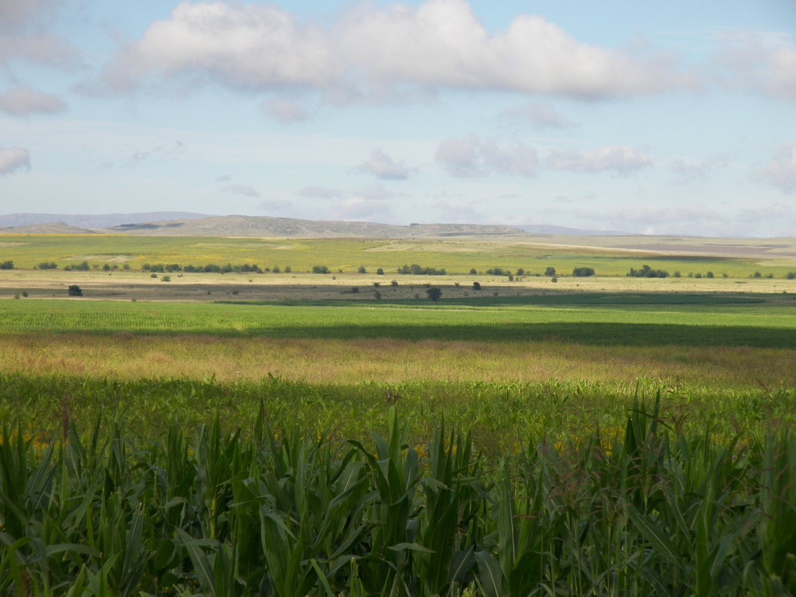 Free Serene Green Fields 4 Stock Photo
