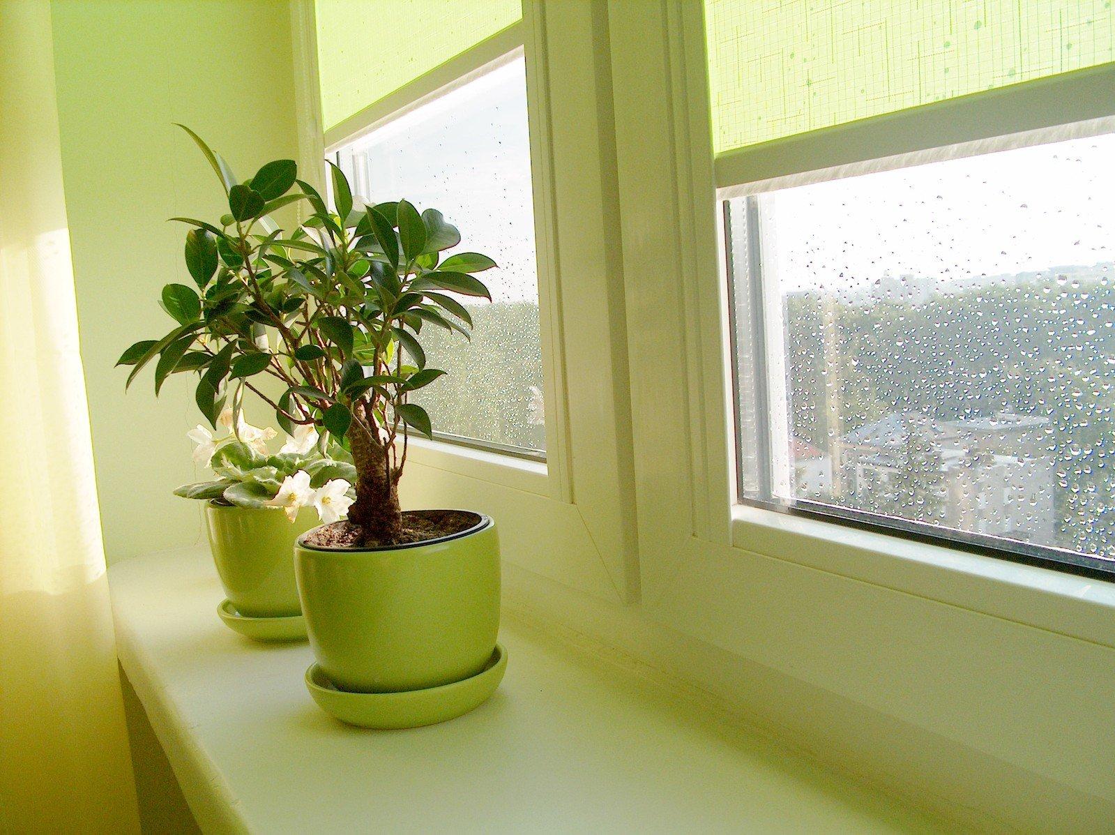 Фото дизайн комнатных цветов в квартире