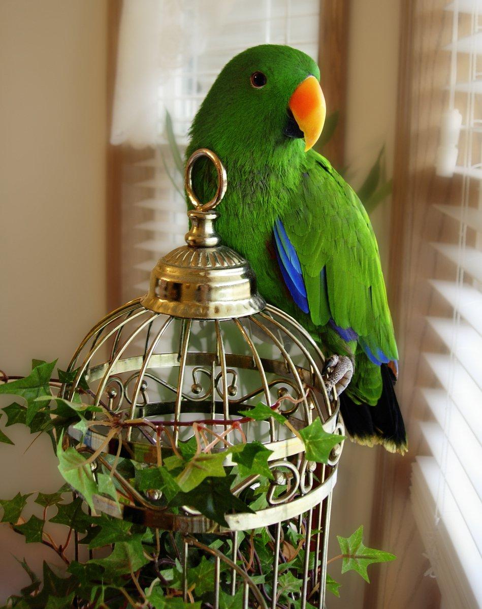 Как сделать клетку из бумаги для попугая