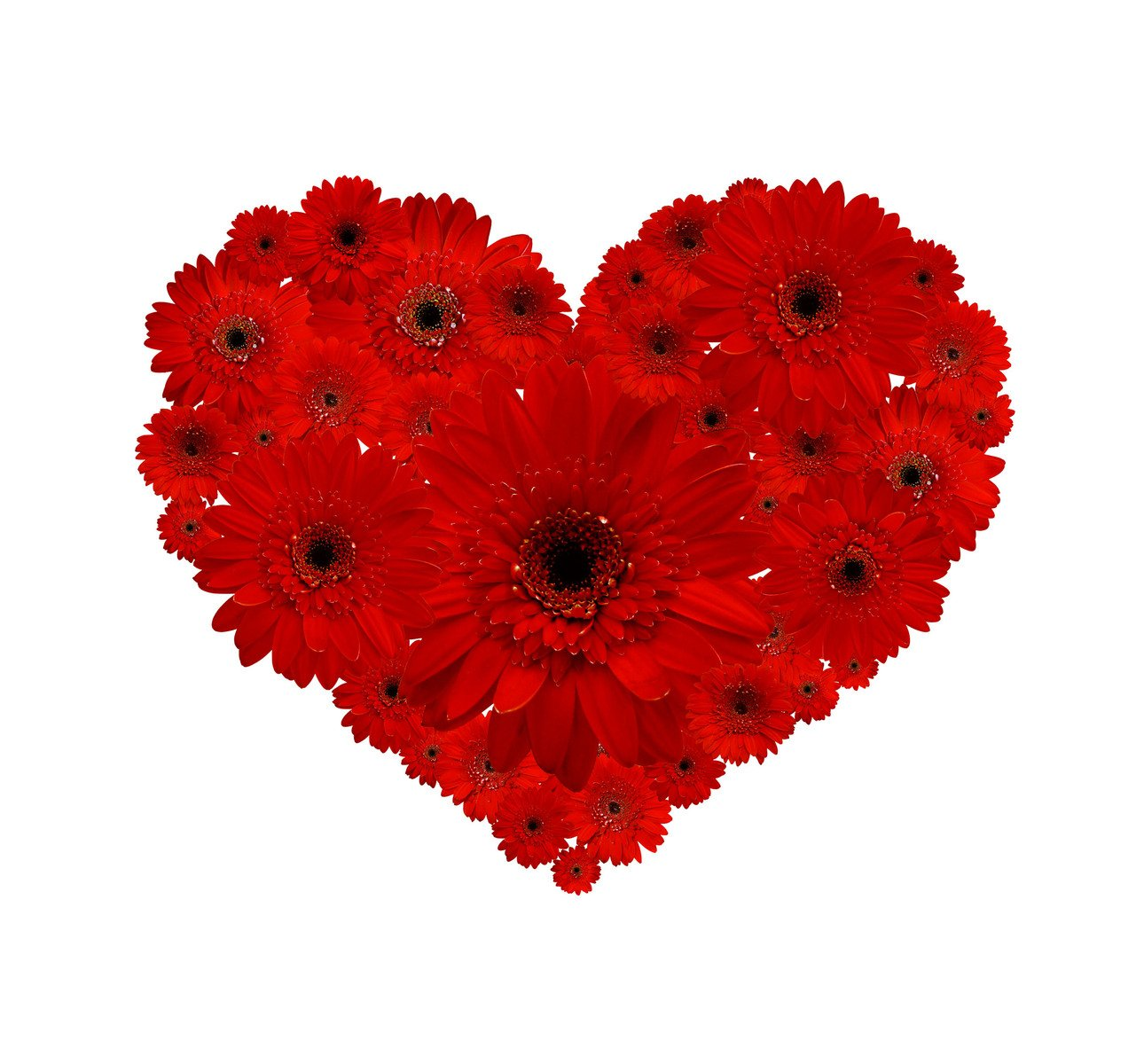 Free Corazón de flor roja 1 Stock Photo - FreeImages.com