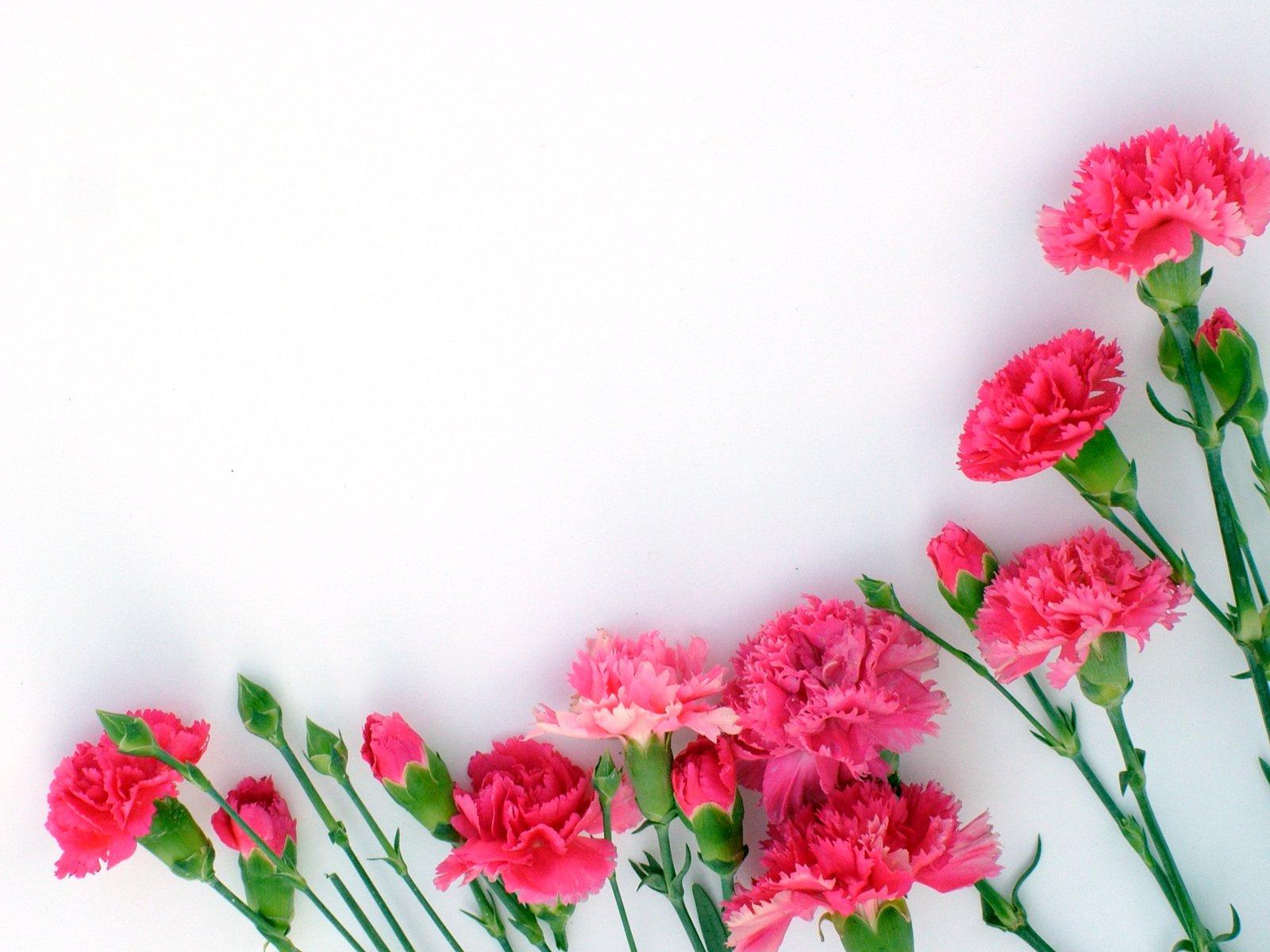 Днем, цветы гвоздики на открытке