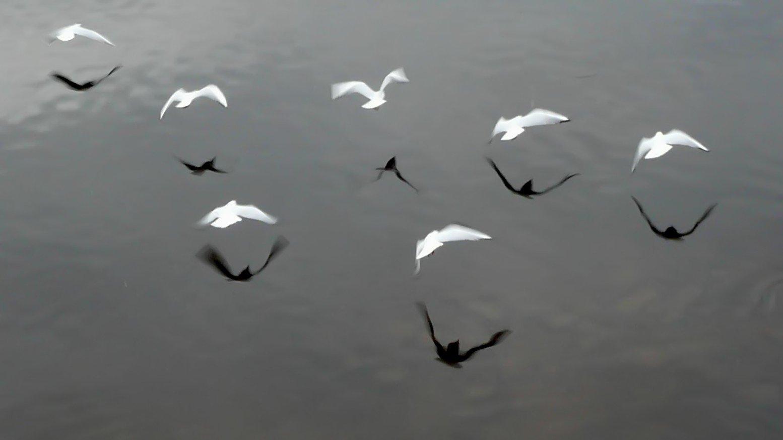 Fiori Bianchi Che Volano.Free Uccelli Bianchi Che Volano Stock Photo Freeimages Com