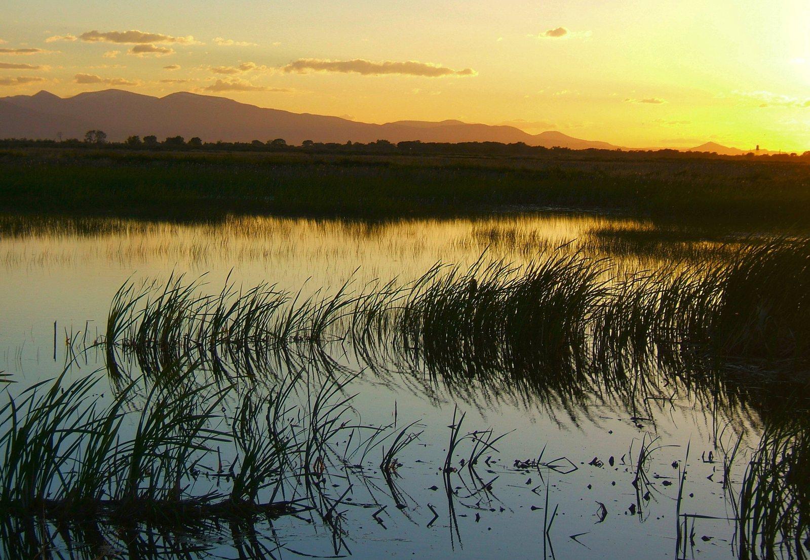 столько картинки водно-болотных угодий может разбираюсь