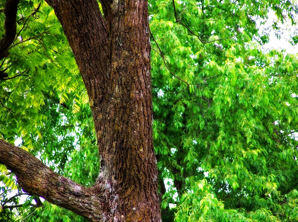 Free Colorful Tree Stock Photo - FreeImages.com