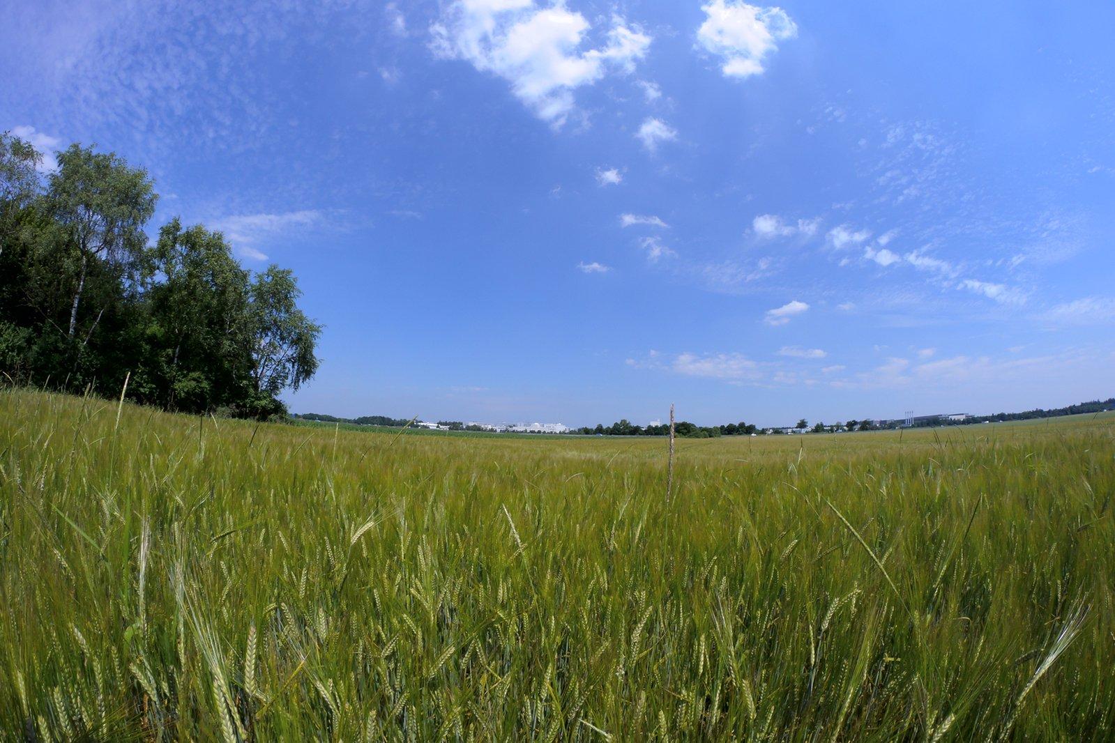 Free Green Field Landscape Stock Photo