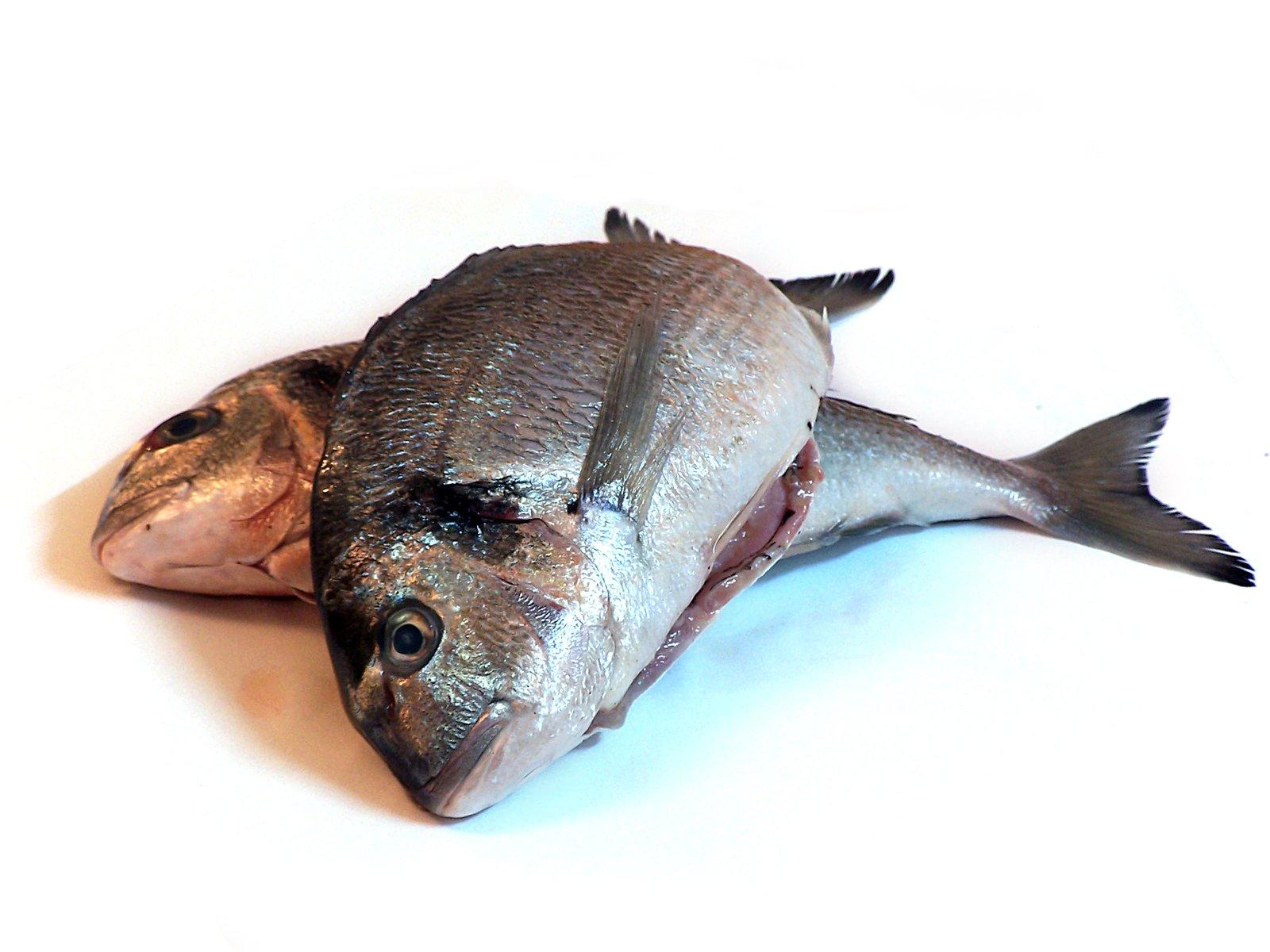 Гнилая рыба картинки