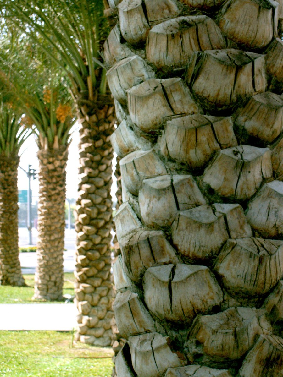 Free Palm Tree Trunk Stock Photo Freeimages Com