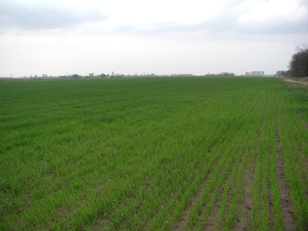 Приватизация сельскохозяйственных земель