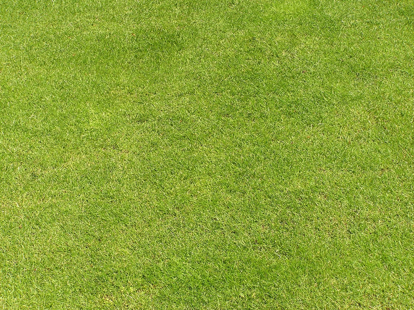 Free Grass Texture Stock Photo Freeimages Com