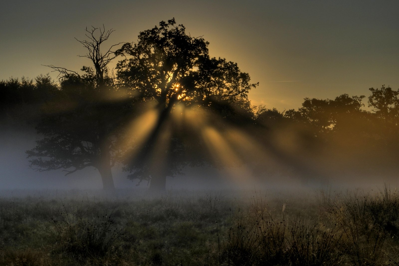Закат в тумане в лесу  № 1140022  скачать