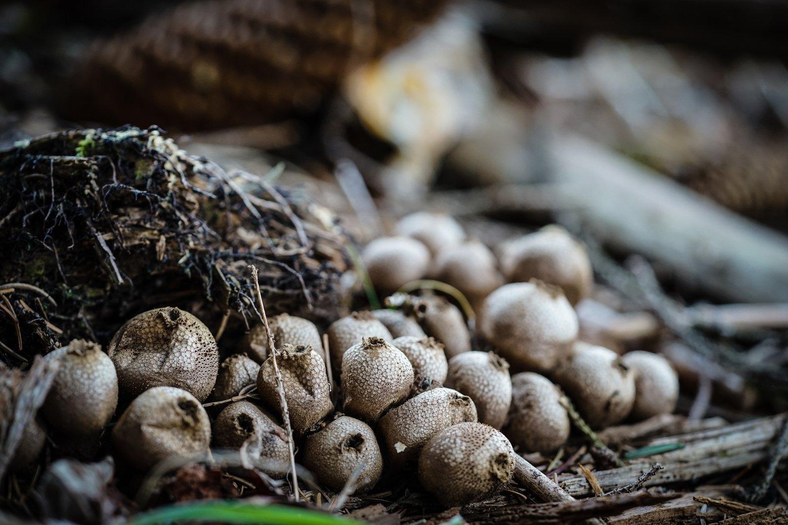 Free Mushroom On Forest Floor Macro Stock Photo Freeimages Com