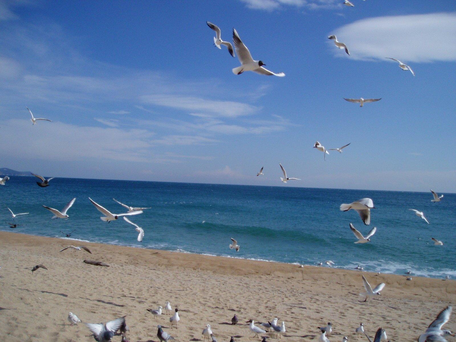Фото пляжа чайка в одессе