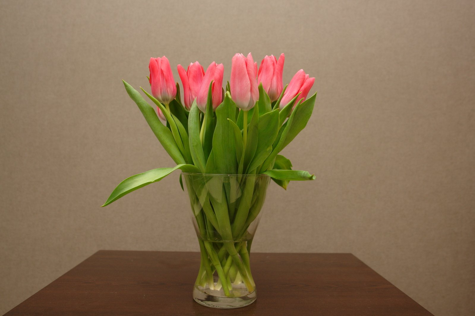 Выгонка тюльпанов к 8 Марта в домашних условиях