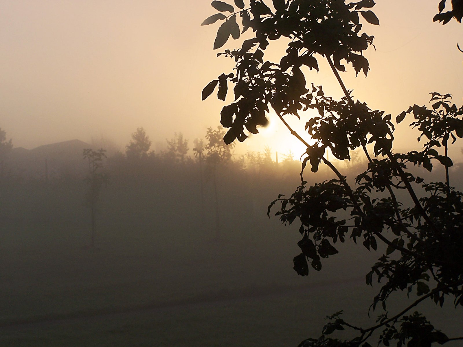 Free Foggy morning Stock Photo - FreeImages.com