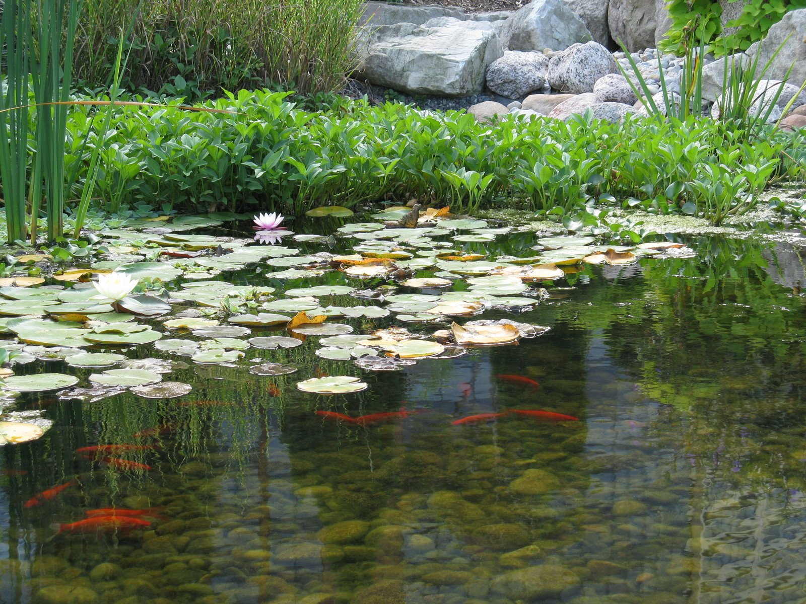 Free fish pond stock photo for Stocked fishing ponds