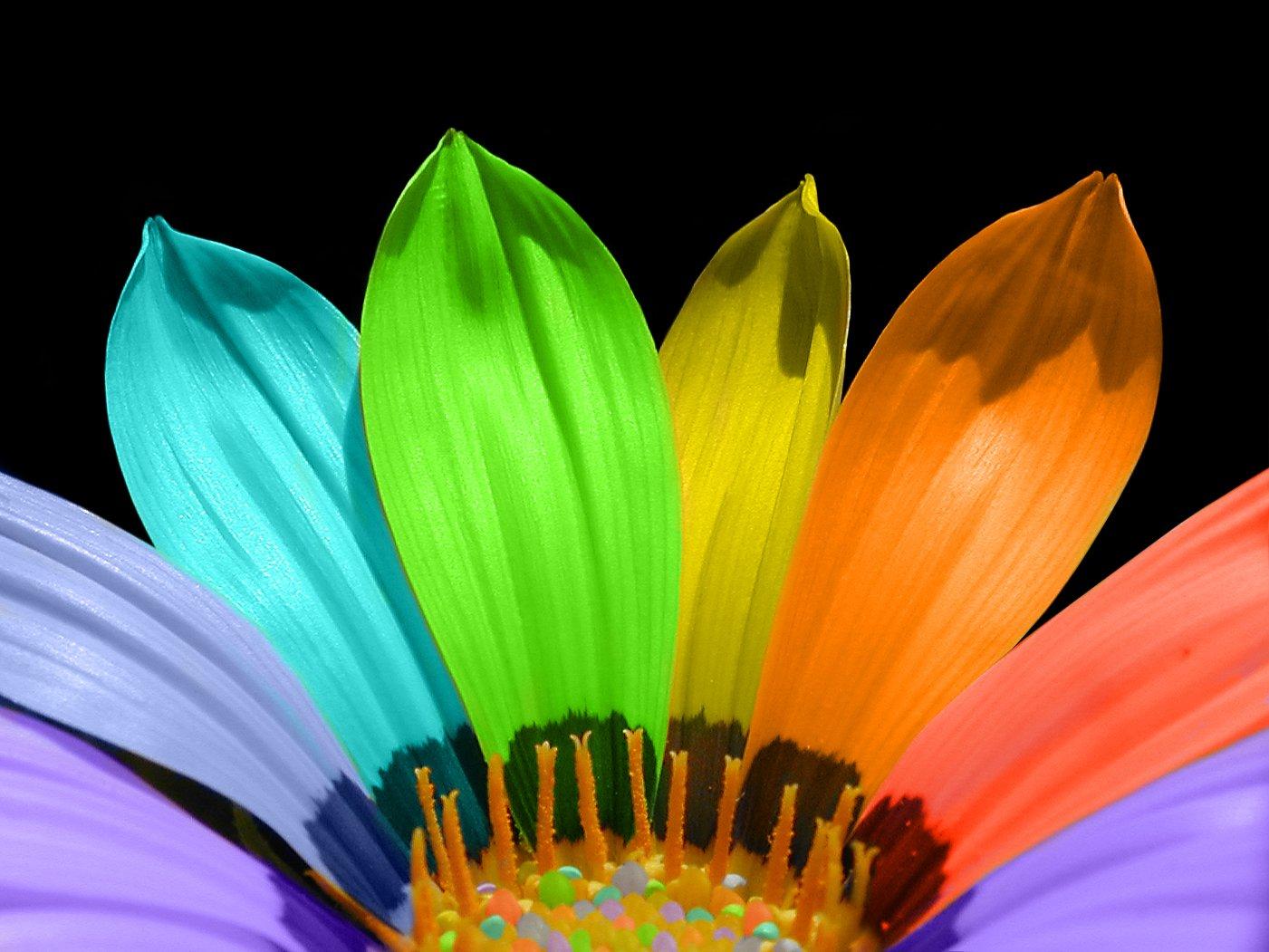 free rainbow flower stock photo freeimages com