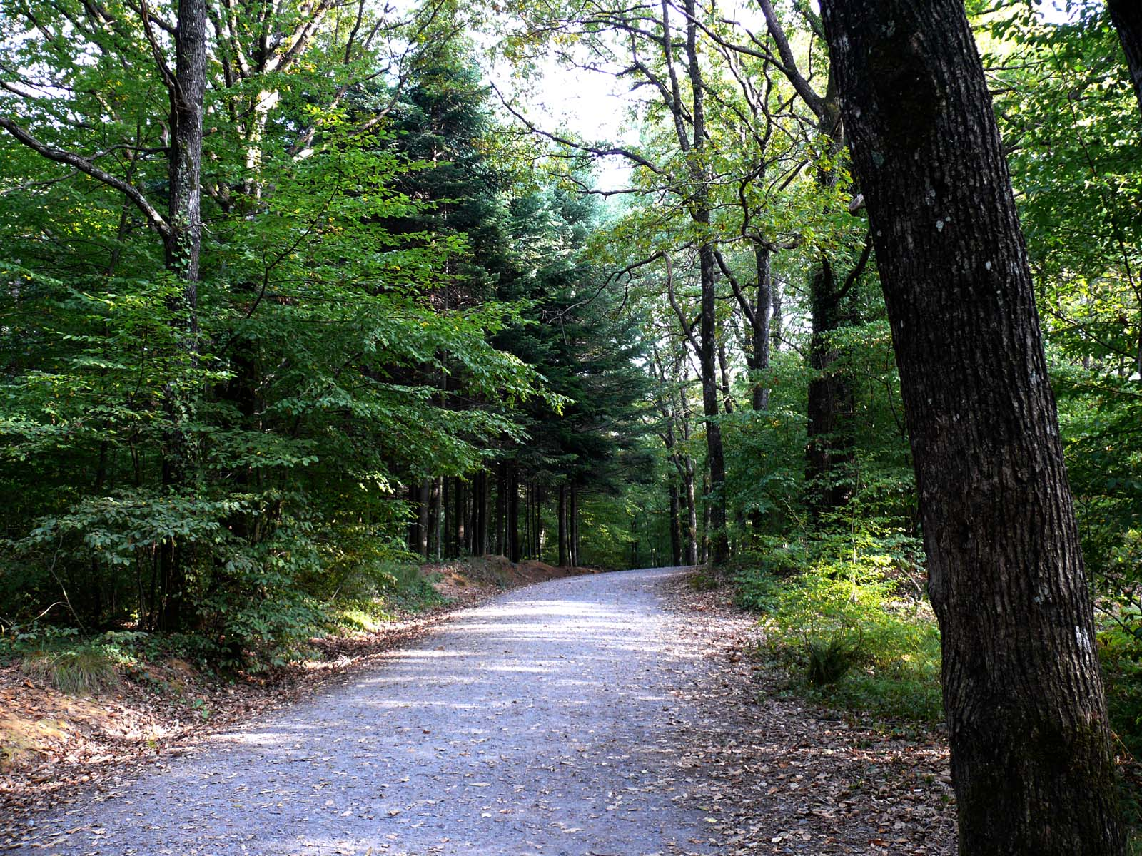 free 森林 stock photo