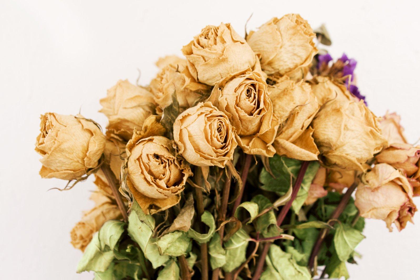 засушенные розы в картинках севера омывается