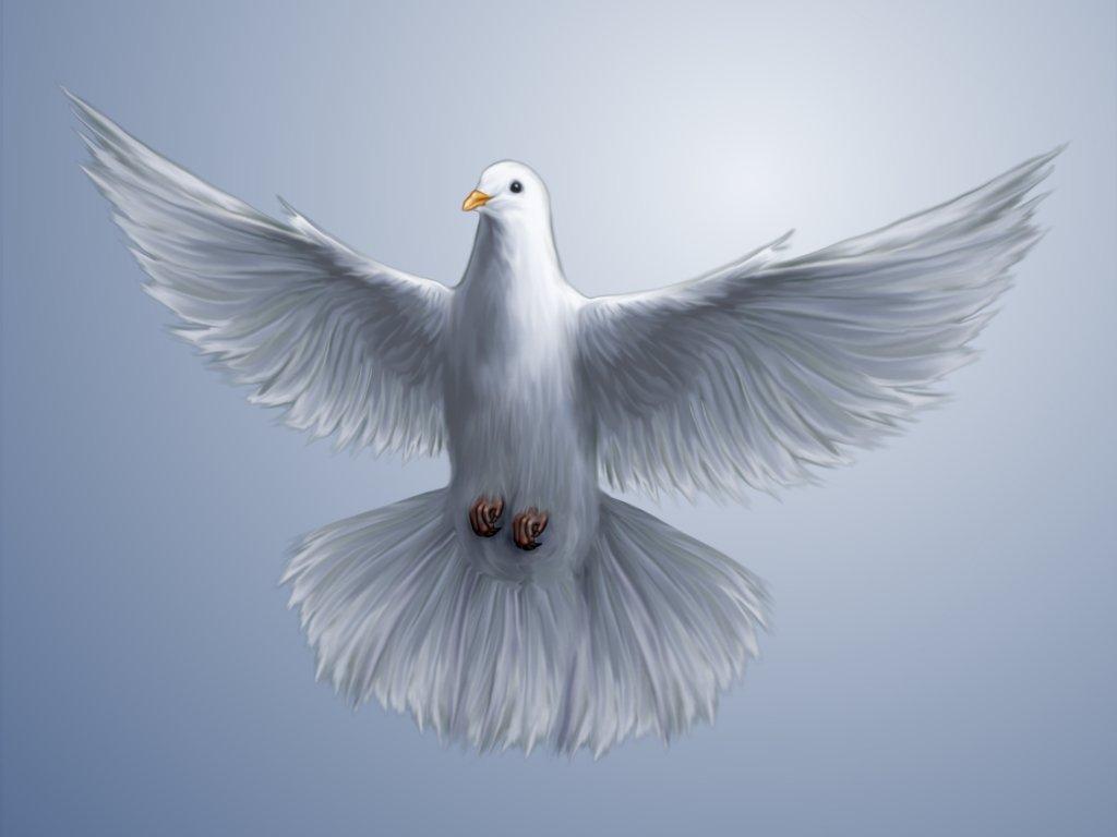 Христианские картинки с голубем, открытка