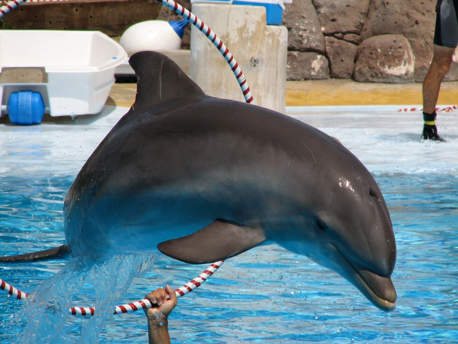 Free Dolphin Stock Photo - FreeImages.com
