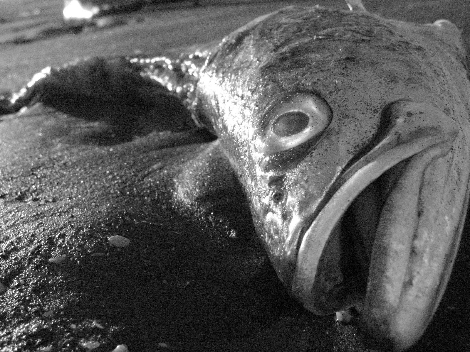 Видеть живую рыбку в аквариуме — ваши взаимоотношения с определенным человеком скованы некими рамками.